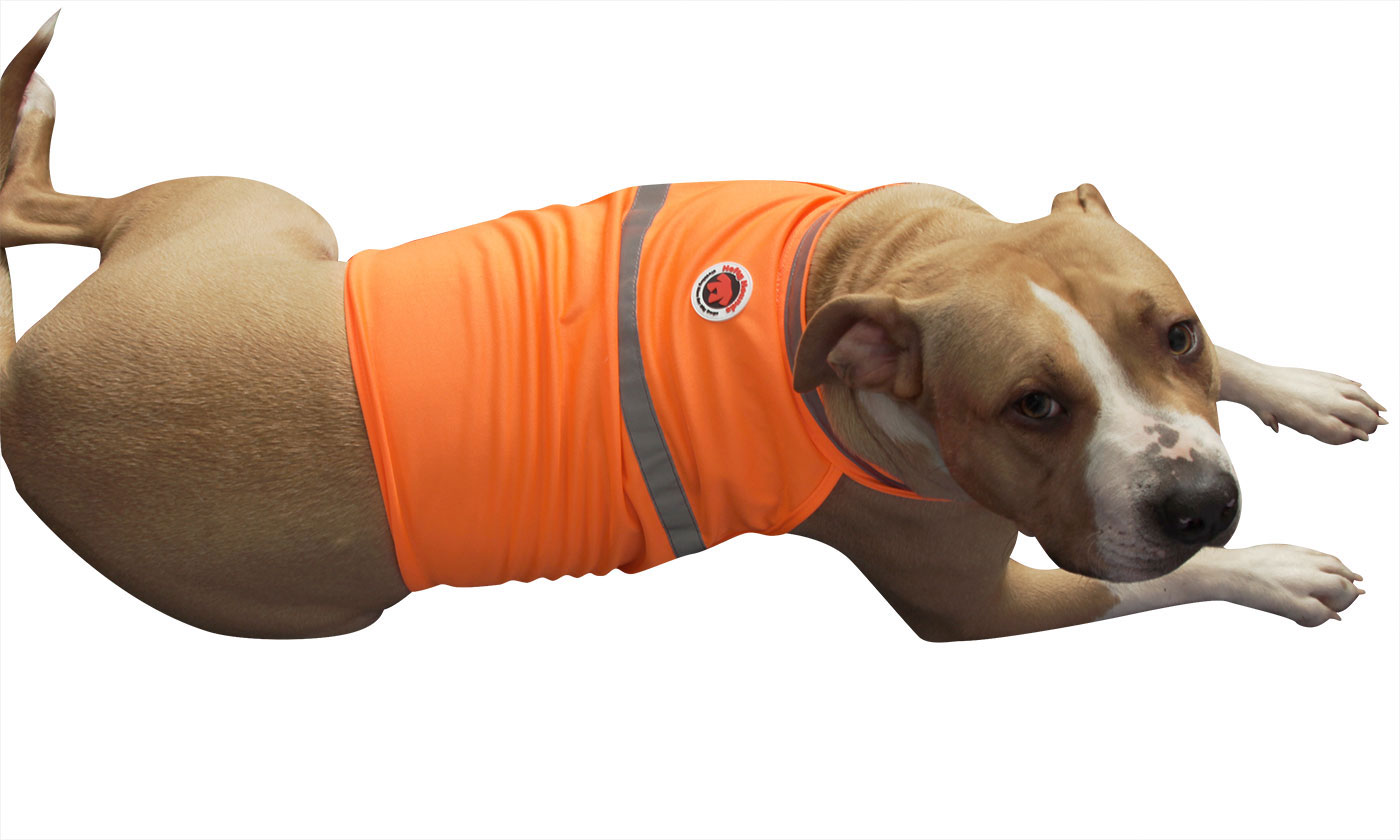 Saftey vest for large dogs