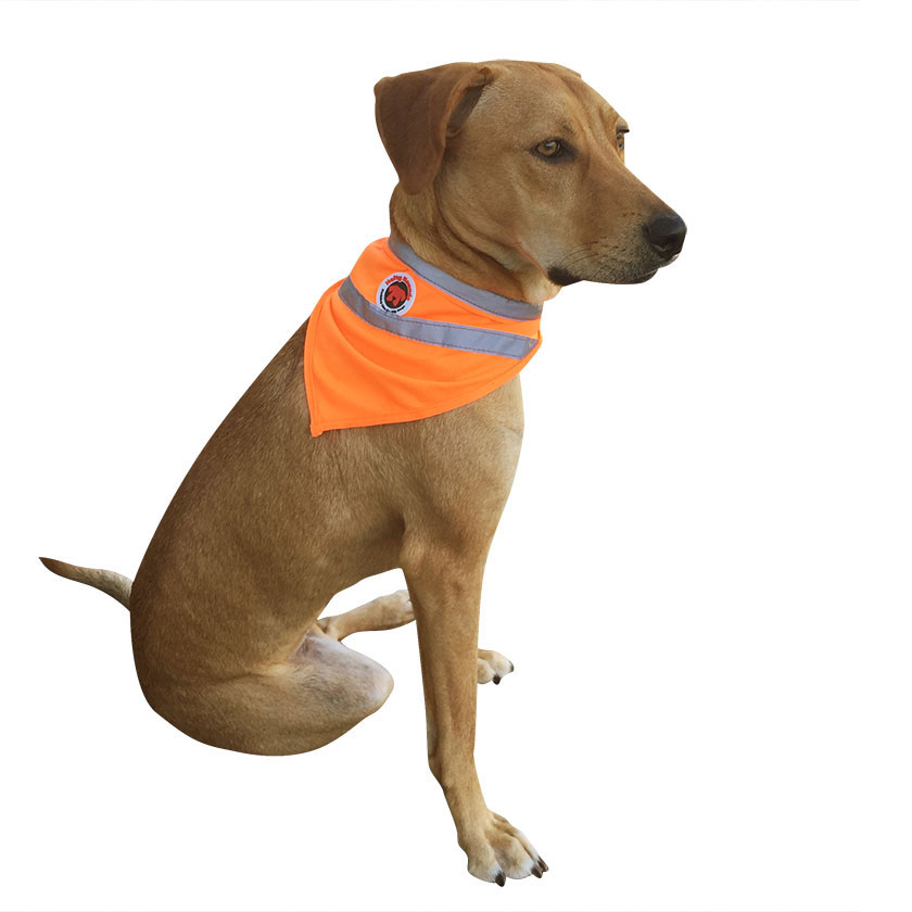 saftey bandanna for dogs