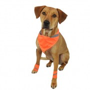 Safety paw bands for dogs