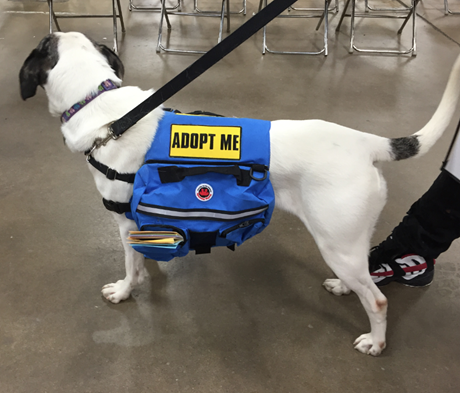 adopt me saddle bags for dogs