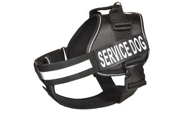 black_unimax__222 Service Dog