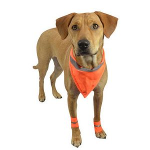 safety bandana for dogs