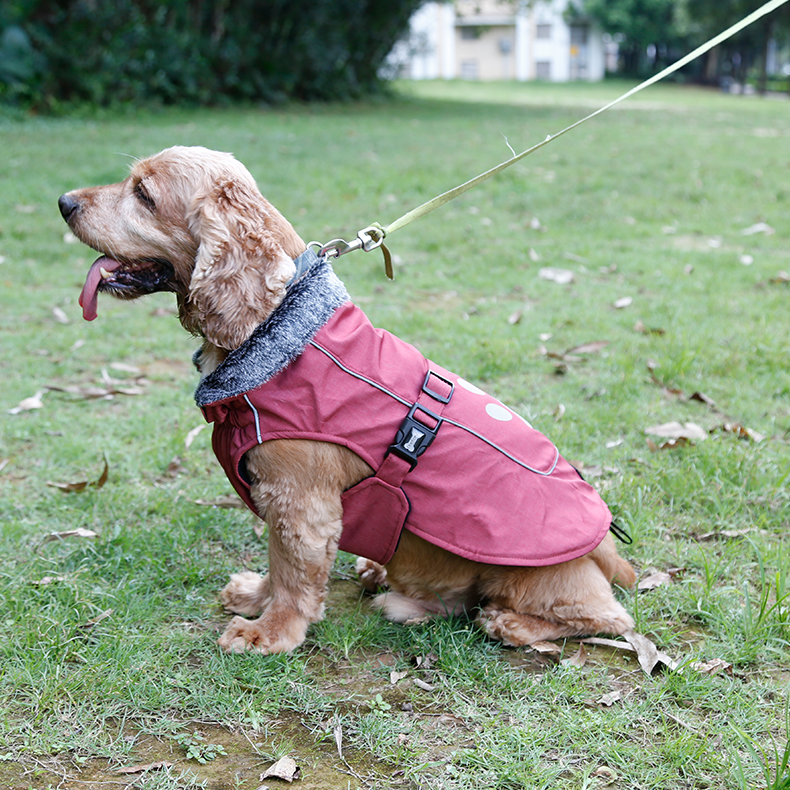 weather-resistant-lined-winter-coat large dogs