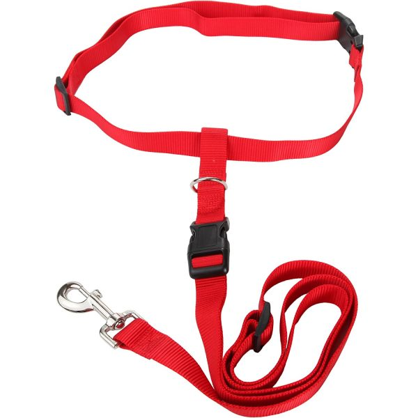 walking leash for dogs