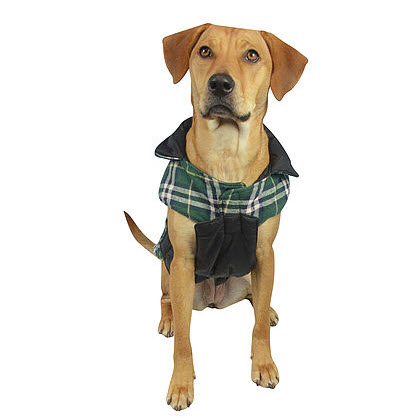 Reversible Plaid Coat with Deep Chest Front View Hefty Hounds