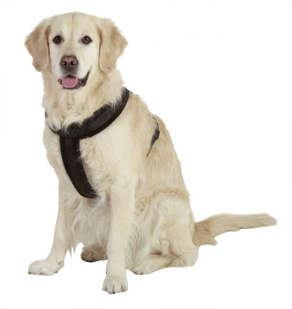 dog harness front