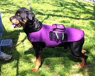 activity vests for large dogs