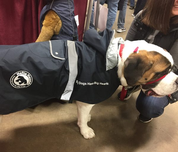 big dog waterproof coats