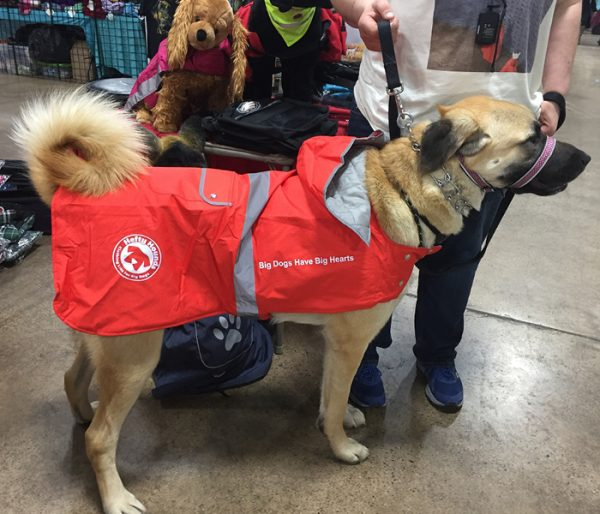 waterproof coats for dogs