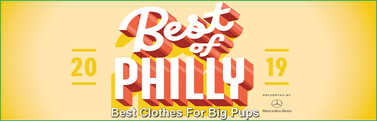 best of philly winner clothes for big dogs